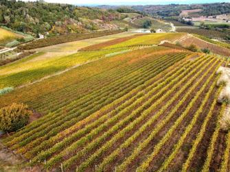 vigne e colline