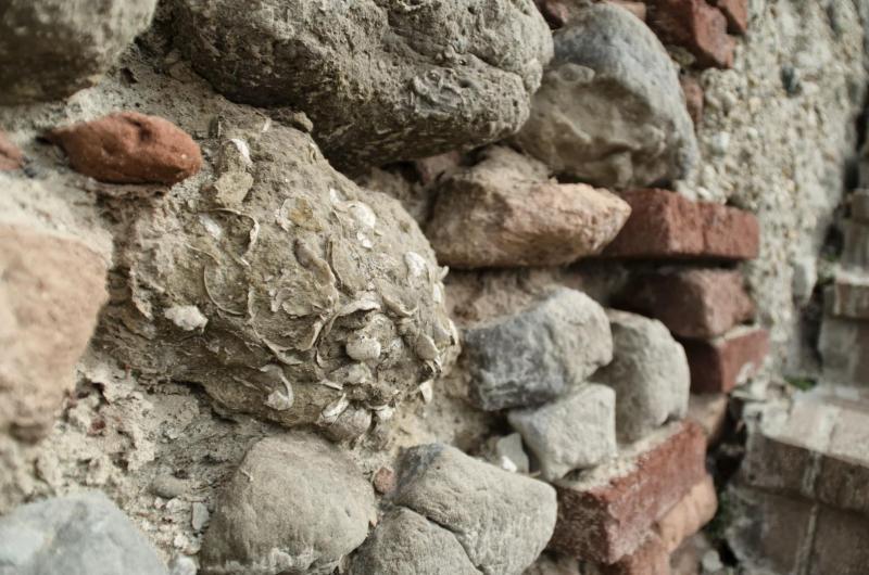 Affioramenti fossiliferi