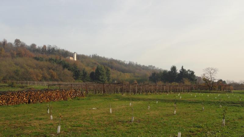 Panorama sulla collina di Villareggia