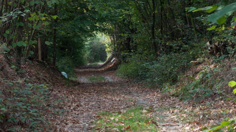 Tratto di Sentiero nel bosco in Comune di Barone C.se