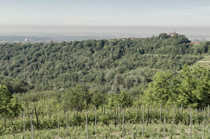 Colline, Pino d'Asti